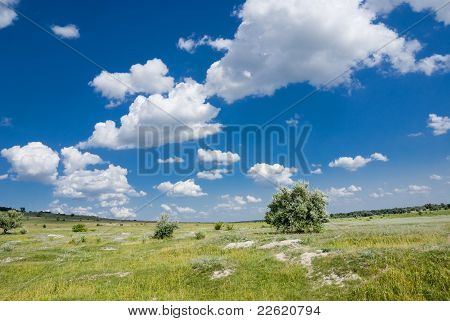 Summer In The Steppe