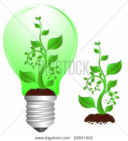 Bulb And Plant2