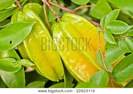 Starfruit On Tree
