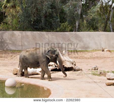 Wandern Elefanten
