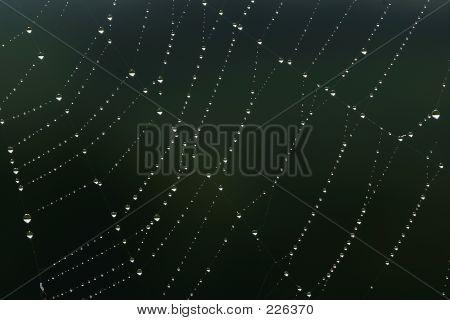 Web Of Diamonds