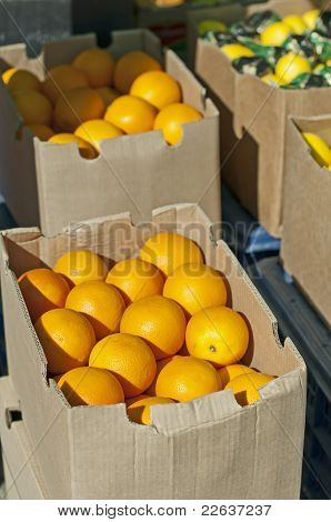 Oranges In Boxes