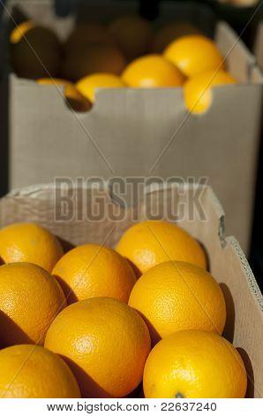 Oranges In Boxes