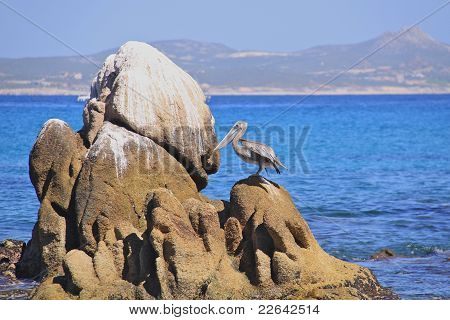 Lonely pelican on the rocks
