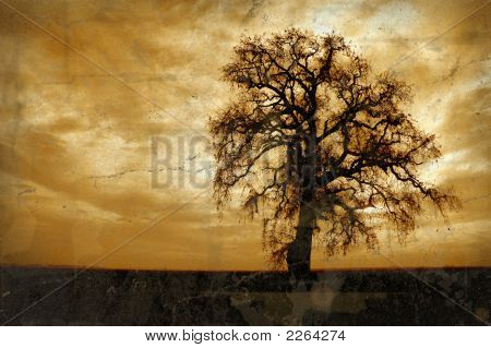 Grunge Winter Oak Tree