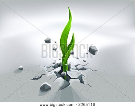 Strong Sprout, Pushing Out Through Stone Ground