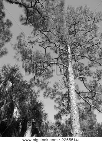 Grayscale Trees