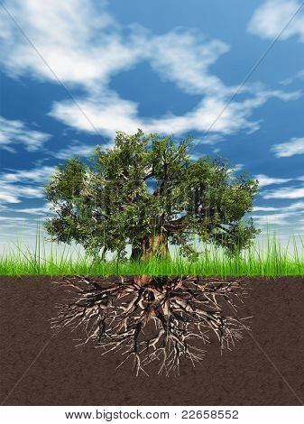 High resolution old baobab tree isolated on white with roots in ground or earth and a blue sky with white clouds background