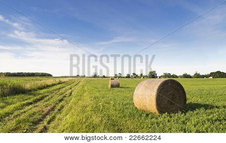 Hay Harvest and Tire Tracks, Pano