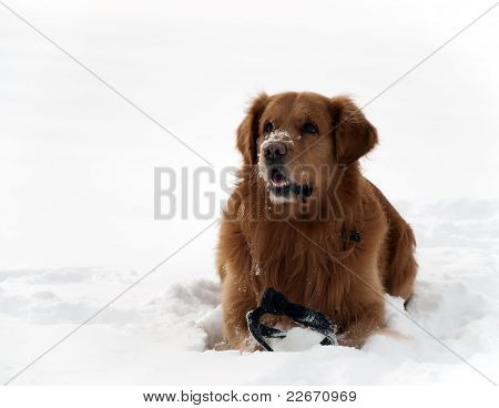 Dog In The Snow Beautifull