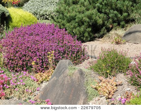 Heathers And Drought Tolerant Plants