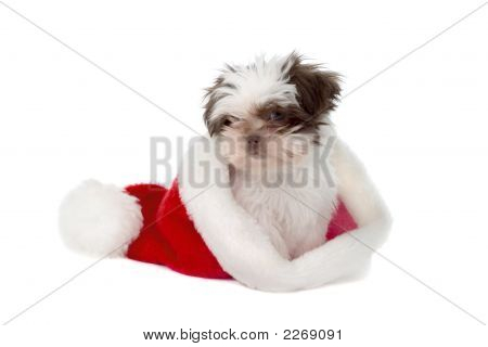 Puppy In A Santa Hat 2