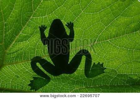 Frog's Shadow
