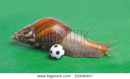 Snail Playing Soccer