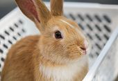Brown Bunny Sit In White Basket At Pets Corner. Selective Focus poster