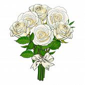 Big Bunch, Bouquet Of White Roses Tied Up With Silk Ribbon, Sketch Style, Hand Drawn Vector Illustra poster