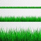 Green Grass Border Set On Transparent Background, Vector Illustration. poster