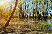 Forest Spring Landscape - Little Spring Forest Grove Flooded With Overflowing Spring Water In Sunny  poster