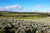 stock photo of lamar  - Lamar Valley in Yellowstone National Park Wyoming - JPG
