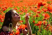 Poppy, Remembrance Day, Anzac Day. Summer, Spring, Poppy Flower. Opium Poppy, Youth, Freshness, Ecol poster