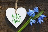 Hello April Greeting Card With Blue First Spring Flowers.decorative White Heart And Blue Snowdrops.b poster