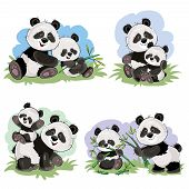 Cute Baby Panda Bear And Its Mother Playing On Grass, Eating Bamboo Stems And Leaves, Vector Cartoon poster