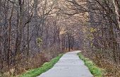 A Paved Trail Leads Through The Woods Into The Distance. poster