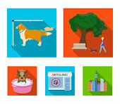 Walking With A Dog In The Park, Combing A Dog, A Veterinarians Office, Bathing A Pet. Vet Clinic An poster