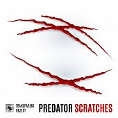 Animal Red Scratches On White Background. Claw Scratch Mark. Paper Claws Animal Scratching. Animal P poster