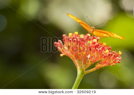 Beautiful Orange Butterfly on Colorful Flower Against Green Background.