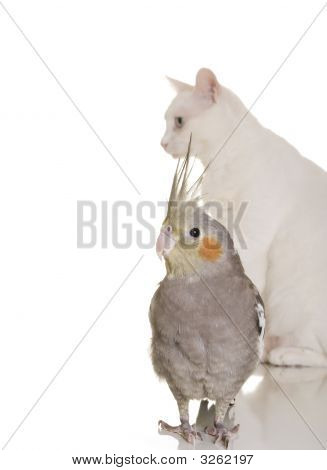 Bird And Cat Story