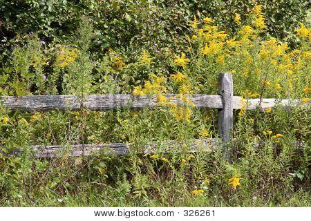 Goldenrod Fence