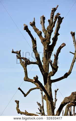 Cutted Tree Branches, Blue Sky Background