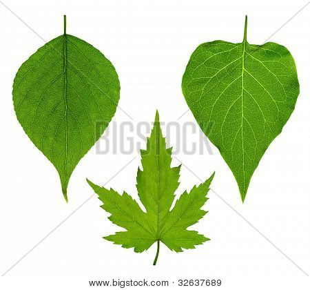 Collage Of Three Leaves
