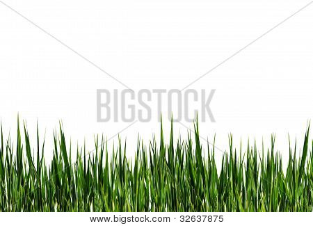 Streifen von grünem Gras