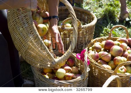Hand And Baskets With Apples