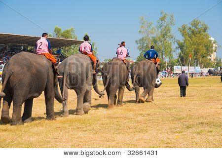 Elephant Soccer Team Entering