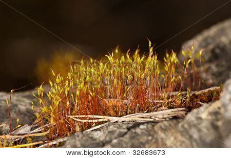 Moss Close Up On Rock