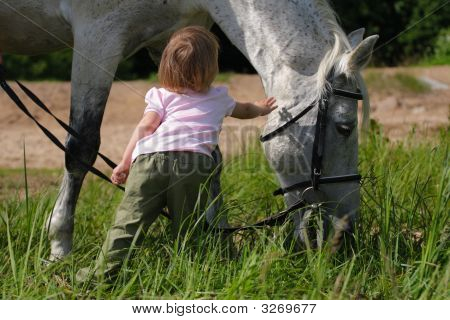 Little Girl And Big Horse'S Head