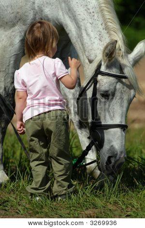 Small Girl And Big Grey Horse