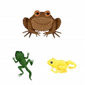 Isolated Object Of Frog And Anuran Sign. Collection Of Frog And Animal Stock Symbol For Web. poster