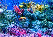 Coral Reef Aquarium Tank For Background. Amazing Colorful Saltwater Aquarium At Home. Beautiful Aqua poster