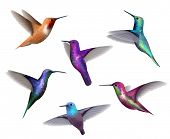 Flying Hummingbirds. Little Colored Birds Exotic Jungle Colored Little Hummingbirds Vector Realistic poster