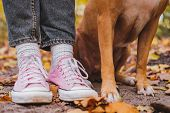 Human And Dogs Feet Among Autumn Leaves. Close-up Shot Of Sneakers And Dogs Legs Side By Side, The poster