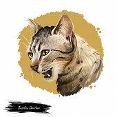Brazilian Shorthair Cat Isolated On White Background. Digital Art Illustration Of Hand Drawn Kitty F poster