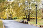 City Park In The Fall. Benches In The Autumn Park. poster