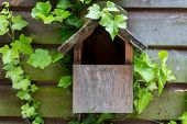Bird house, birdhouse or bird box in summer or spring sunshine covered with cobwebs and green ivy le poster