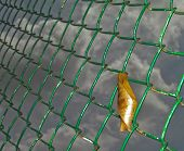 foto of upcoming  - A dry lonely leaf fell down and stuck on the fence through which the cloudy sky of upcoming winter could be seen - JPG