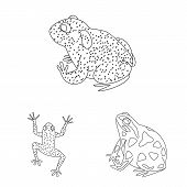 Vector Illustration Of Amphibian And Animal Symbol. Set Of Amphibian And Nature Vector Icon For Stoc poster