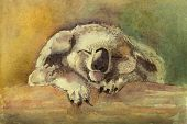 Little Fluffy Cute Koala Bear Sleeps Sweetly On A Thick Trunk Of A Tree. Watercolor Beautiful Funny  poster